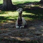 This 20 year old llama is kept alone in a tiny plaza surrounded by traffic to promote the hotel.