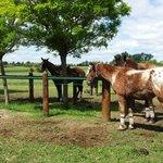 Resting horses