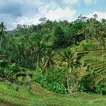 The beautiful rice fields at Jatiluwih