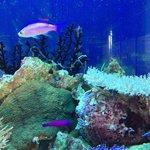 Coral reef tank at Palau Aquarium.