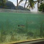 Mangrove display at Palau Aquarium.