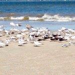 Lots of shorebirds!