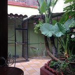 Parrots in the patio