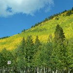 Monarch Pass fall colors