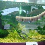 Aquario de Peixe elétrico