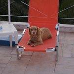 hotel dog