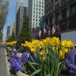 Spring flowers in Herald Square