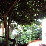 Jardins do hotel Silberstein