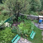 Apple trees in the front yard