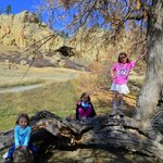 Tree climbing in the picnic area