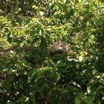 Iguana en los árboles !!!