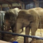 Bedtime with the Elephants