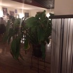 Plants and metal