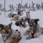 Denali Adventures - Private Day Tours
