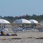 New beach chairs and umbrellas at the Aquarius/Prestige