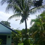 coconut palm tree next to the pool