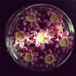 charming lotus arrangements