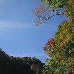 色づき始めた木々