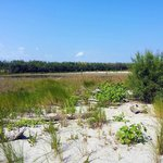 le dune , il bosco