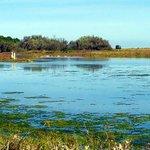 le lagune salmastre  adiacenti al fiume Bevano