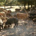 Rogegaard Naturreservat