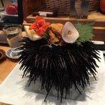 Beautiful sea urchin
