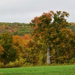 Fall colors seen from the house
