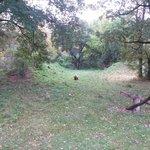 Bears' enclosure