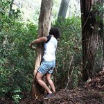 Hugging the tree to get to the guava on the other side.