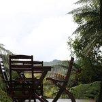 Treetops Lodge Foto