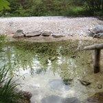 Ferchen Brook outside the sauna at Nature Spa