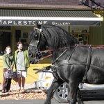 Maplestone Gallery