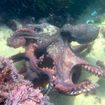 Advanced Critter Hunting Safari: Octopus