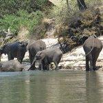 Elephants came to the island and wandered around