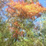 October 19, 2014.  Looking up to fall foliage.