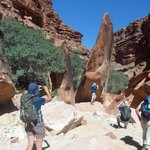 Hiking to the Havasu  Falls