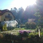 Terrace, Morning