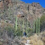 Lot's of great hikes in Tucson.