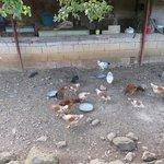 Foto de Agriturismo La Fonte