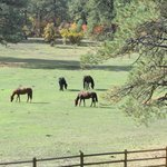 from the porch, Elk Trace horses in the meadow