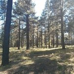 Pine tree area behind the hotel - perfect for your dog