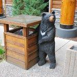 Pilfering bears