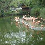 Flamingos Zoológico de Cali