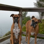 pups on vacation