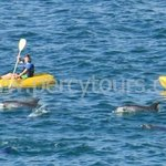 Kayaking with Dolphins, Hermanus