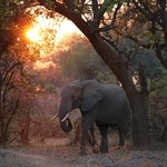 Elephants entering Flatdogs at Sunrise