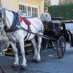 Private guide and carriage