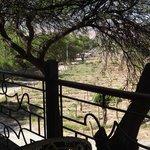 Desde el balcón hacia lo viñedos