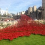 Moving tribute to WW1 at the Tower of London