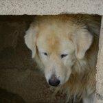 Poor dog in cage / Pauvre chien enfermé dans un cage